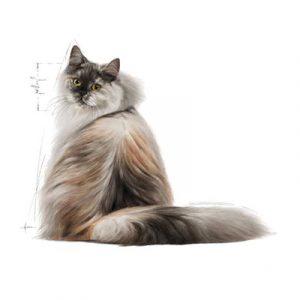 غذای خشک گربه رویال کنین بالغ با پوست و موی حساس